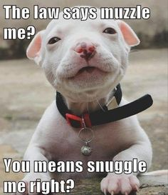 Funny Animal Pictures Of The Day – 21 Pics   Follow @gwylio0148 or visit http://gwyl.io/ for more diy/kids/pets videos