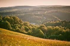 Spa, Eifel, Das Hotel, Vineyard, Outdoor, Recovery, Woodland Forest, Landscape, Nature