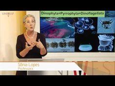 Biologia Geral - Aula 12 - Alveolados - YouTube