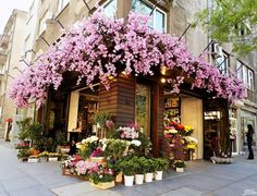 Precious Tips for Outdoor Gardens - Modern Beautiful Flowers, Beautiful Places, Exotic Flowers, Purple Flowers, Flower Shop Interiors, Flower Shop Design, Store Window Displays, Flower Market, Flower Shops