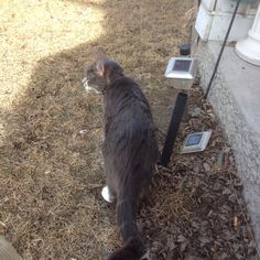 Here's is my cat Charlie looking around outside