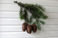 Pine Cone No. 2 / scb