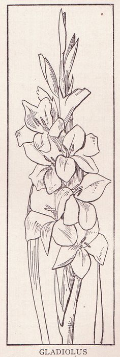 gladiolus page 1175 this drawing is from the public domain flickr