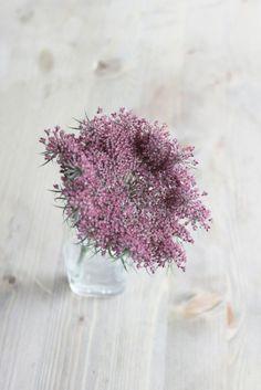 ©La mariee aux pieds nus - Fleur de carotte