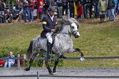Bragi frá Austurkoti IS2005182650 - Islandpferde Gestüt Lindenhof
