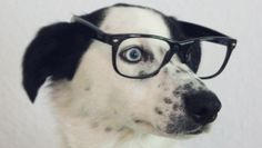 QUIZ: How Smart Is Your Dog?