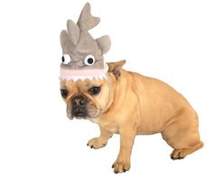 Rubies Costume Halloween Classics Collection Pet Costume, Medium to Large, Shark Hat Dog Shark Costume, Shark Costumes, Pet Costumes, Pet Shark, Shark Hat, Yorkie, Chihuahua, Cat Hat, Pet Gifts