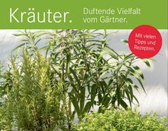 #Vorarlberger Bloghaus: [ #vorkoster ] Broschüre: Kräuter - Duftende Vielf... Workshop, Herbs, Plants, Education Policy, Textbook, Biology, Science, Tips, Atelier