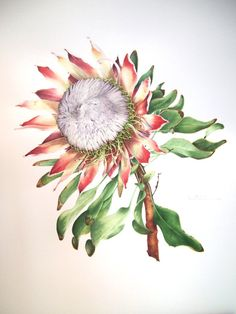 Original Watercolour King Protea by Watercolorswithlight on Etsy, €650.00