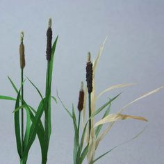 These scale miniature cattails are made from (L to R) commercial flocking, florists foam, home made flocking, sand, with leaves of (L to R) painted paper, painted paper, paper ribbon, raffia.