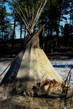 Brain tanned Buffalo hide tipi by Larry Belitz of South Dakota Native American Teepee, Native American Beauty, Native American Tribes, American Spirit, American Indian Art, Native American History, Native Americans, Native American Pictures, Indian Pictures