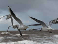 Seagulls at Hornsea Beach by Tom Wood East Yorkshire, East Coast, Toms, Beach, Animals, Animales, Animaux, Seaside, Animal