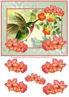 Hummingbird and Freesias decoupage sheet on Craftsuprint - Add To Basket!