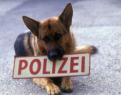 Kommissar Rex K9 - German Shepherd Dog Forums