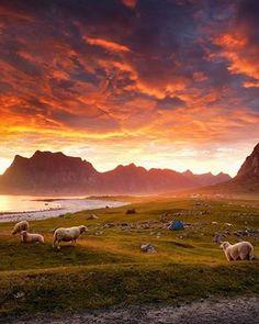 Die #Mitternachtssonne ist da  Je nach Region scheint sie bereits einige Tage bzw. Wochen und erhellt den Norden von #Norwegen Tag und Nacht :) Dieses Foto ist auf den Lofoten aufgenommen worden.