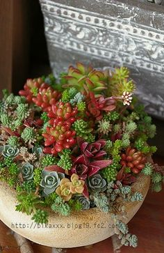 I wish I could successfully grow suculentas . Growing Succulents, Succulents In Containers, Cacti And Succulents, Container Plants, Planting Succulents, Container Gardening, Planting Flowers, Succulent Bowls, Succulent Gardening