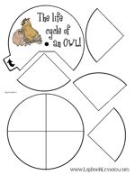 Owl Lapbook from Lapbook Lessons