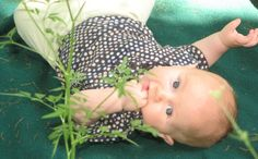 DIY Natural Bug Repellent for Babies and Kids (note: don't add eucalyptus oil if using on babies)