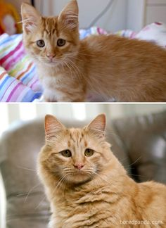 Recently, we asked you to share your then and now pictures of cats growing up and it's time to announce the best pics. Then And Now Pictures, Cool Pictures, 8 Year Olds, Kittens, Cats, Growing Up, Animals, Cute Kittens, Gatos