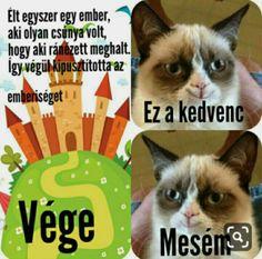 Grumpy Cat Breed, Grumpy Cat Quotes, Grumpy Cat Humor, Funny Cat Memes, Funny Cats, Funny Animals, Memes Humor, Cat Ideas, Grumpy Cat Christmas