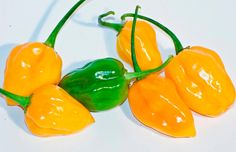 Peppers Seeds,Yellow habanero, Known As Caribbean Yellow Hot Pepper Seeds,Over 40 times hotter than Jalapenos