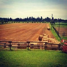 #campi #fieno #balledifieno #natura #country #campagna #sandanieledelfriuli #casapatriarca