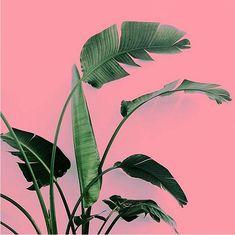 plants-on-pink-9