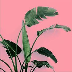 plants-on-pink-9