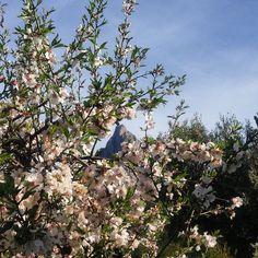 Cuando enero deja de ser invierno y se convierte en primaverafeliz último día! #ItxasmendiNosCuida #Finestrat