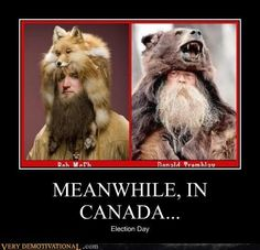 """Wearing a bear for a hat-Best """"meanwhile in Canada"""" memes Canada Memes, Meanwhile In Canada, Very Demotivational, Snowy Weather, Visit Canada, Canadian Humour, Big Beard, Funny Pictures, Funny Memes"""