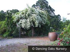 Dancing Oaks Nursery - Garden view from the West Dancing, Photo Galleries, Nursery, Gallery, Garden, Plants, World, Dance, Garten