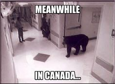 """Good Guy Bear - Funny memes that """"GET IT"""" and want you to too. Get the latest funniest memes and keep up what is going on in the meme-o-sphere. Canadian Memes, Canadian Things, Canadian Humour, Animal Memes, Funny Animals, Animal Humor, Baby Animals, Quotes Girlfriend, Meanwhile In Canada"""