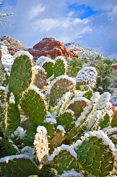 A rare winter storm brings a blanket of snow to the red rocks of Sedona, AZ