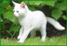 20 Gambar Macam Macam Kucing Terbaik Di 2020 Kucing Kucing Betina Perut Babi