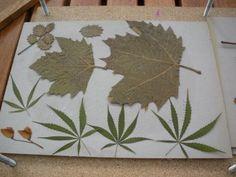 Secar flores y hojas