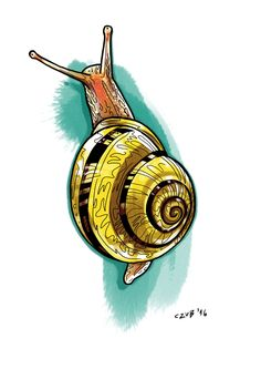 #snail #color #illustration #drawing #art #tattoo #design