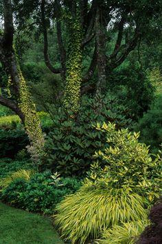 Hakonechloa macra 'Aureola'. Love the drawing of the golden hues up the trees.