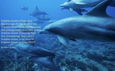 Dolphins Dream  Of Living Free- Not In A Cage ForThe World To See