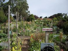Fort Mason Community Garden - Is there anything cooler than a community garden?