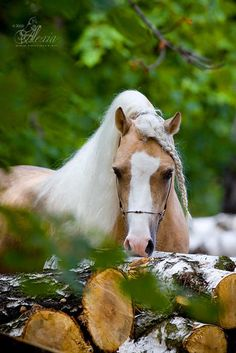 Horse Photography.