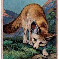 Vintage Graphic Image – Sweet Fox