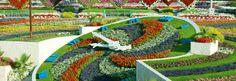 Dubai Miracle Garden, El jardin del Edén en pleno Desierto....!!