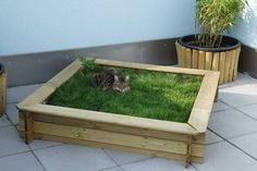 who needs a sandbox? - Giulia Pagana - - wer braucht schon einen Sandkasten who needs a sandbox? Cat Grass, Cat Hacks, Gatos Cats, Cat Playground, Cat Garden, Garden Beds, Cat Enclosure, Cat Room, Outdoor Cats