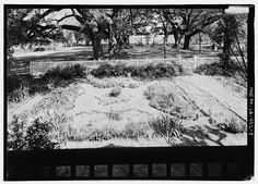 8.  View looking west from the porch - Oakland Plantation, Route 494, Bermuda, Natchitoches Parish, LA