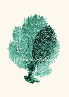 $2.49 for 8x11 Vintage sea fan coral instant download printable art jpeg