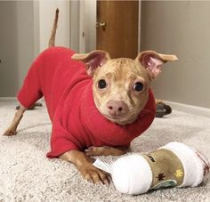 Tuna Dog, Dog Names, Dog Training, Pitbulls, Puppies, Fall, Dogs, Animals, Education