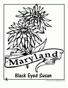 State Flower Coloring Pages Pennsylvania State Flower