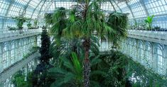 The most beautiful greenhouses in the world: The Palm Greenhouse of Schönbrunn Palace in Vienna