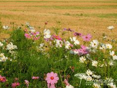 V hlavní roli krásenky. Landscape, Plants, Scenery, Landscape Paintings, Planters, Corner Landscaping, Plant, Planting