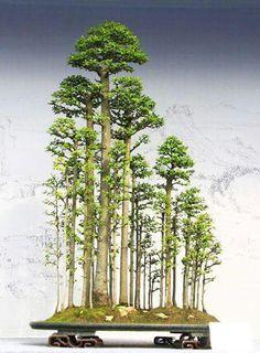 Impresionante bosque bonsai